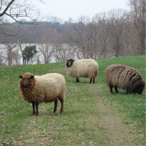 shepherds-folly-pic-1-1.jpg